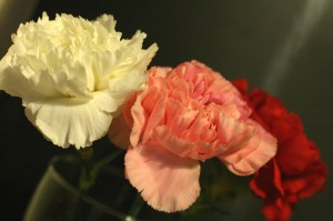 A photo of three carnations in white, pink and red